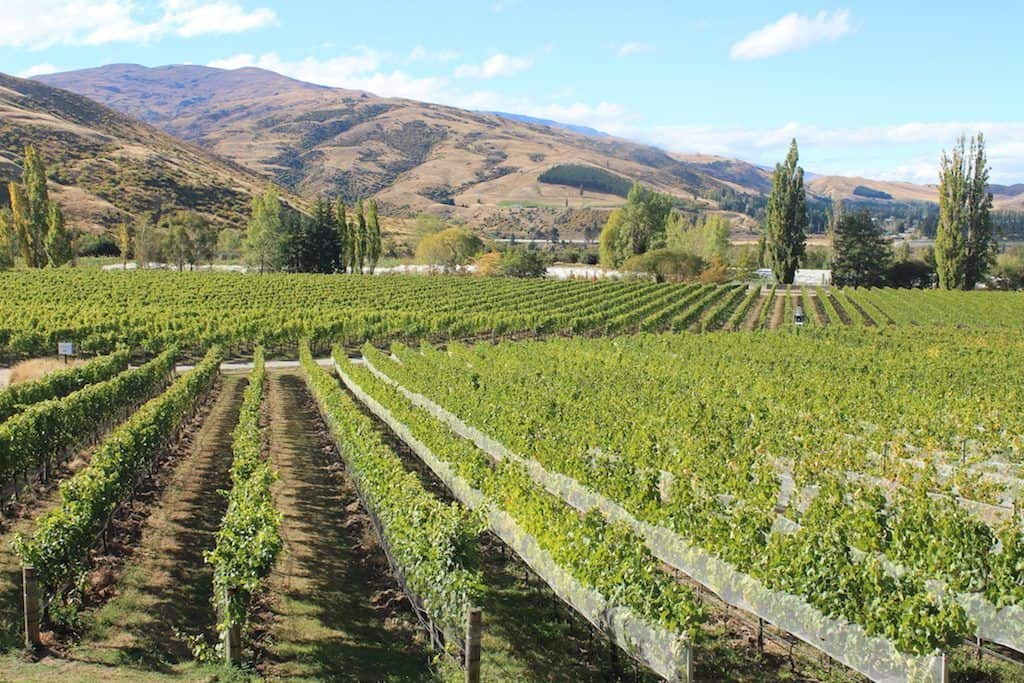 Central Otago wineries Queenstown
