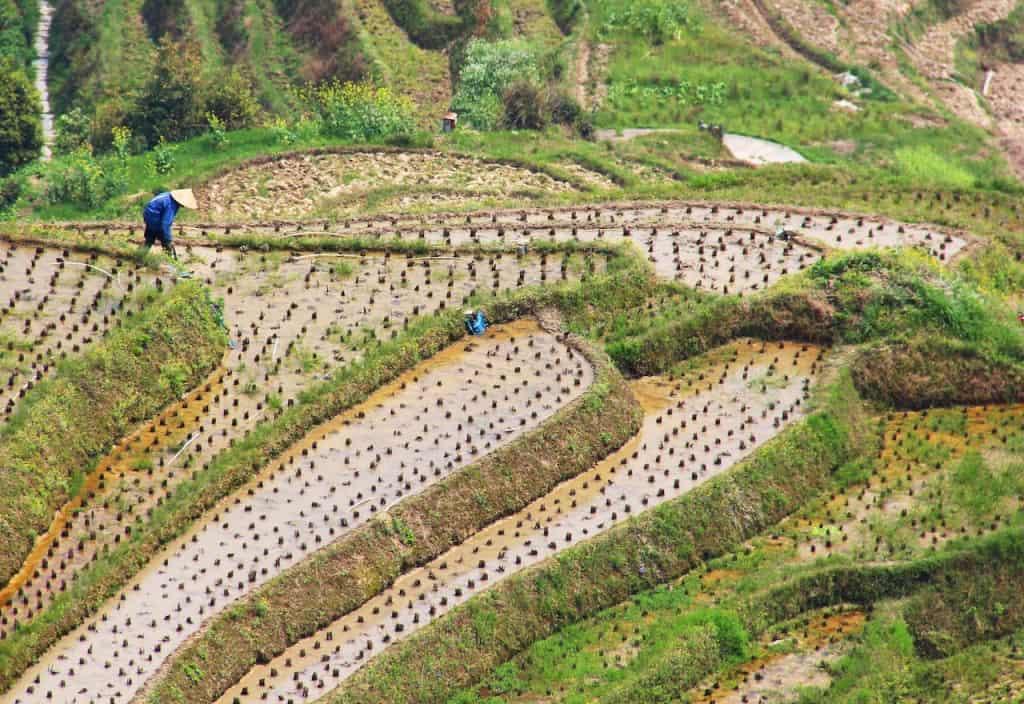 longji rice terraces longsheng