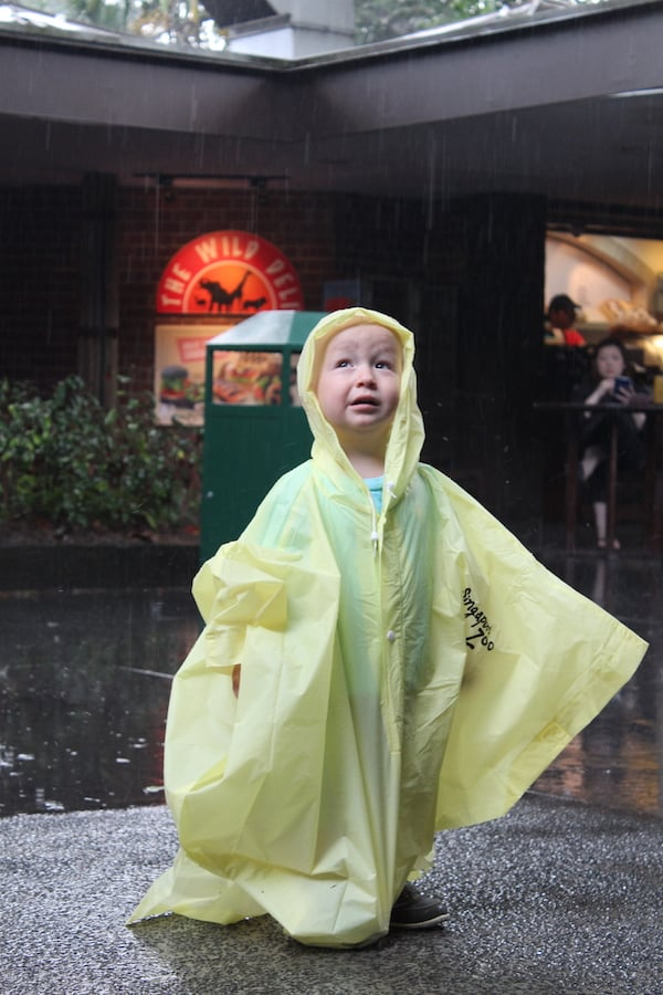 Rainy day singapore zoo