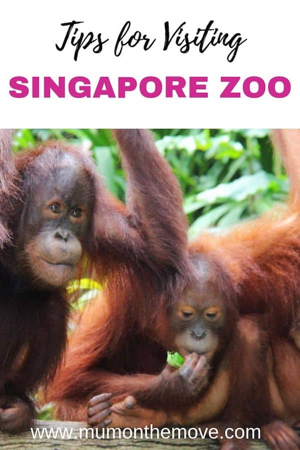 Singapore Zoo tips for visiting