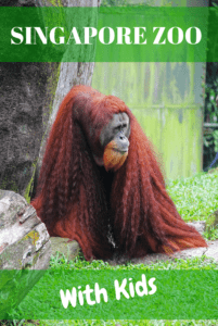 Singapore zoo tips