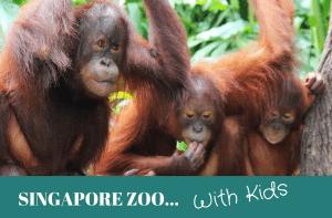 Singapore Zoo with kids