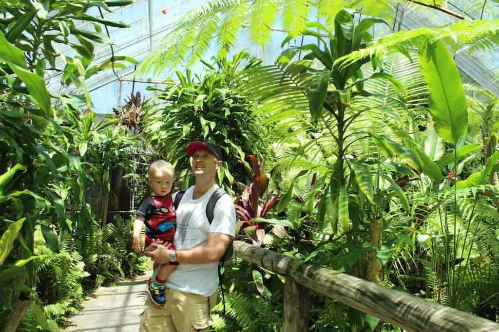 Things to do in Kuranda with kids