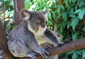 Things to do in Kuranda Queensland Australia