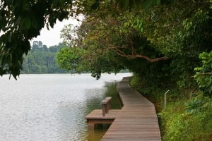MacRitchie Reservoir Singapore with kids