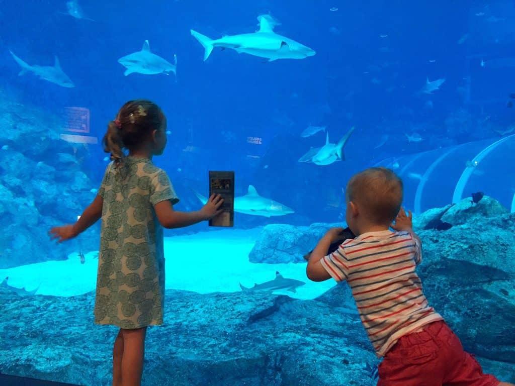 SEA Aquarium Sentosa with Kids