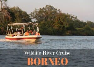 A Wildlife River Cruise in Borneo