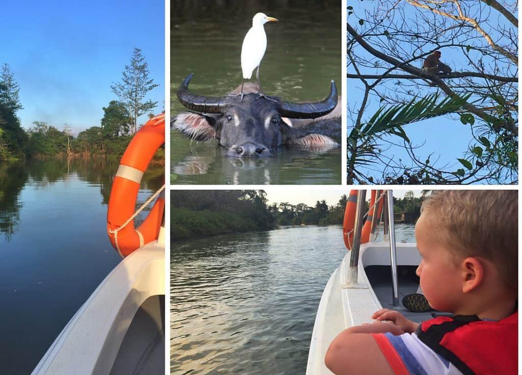 Wildlife cruise Borneo