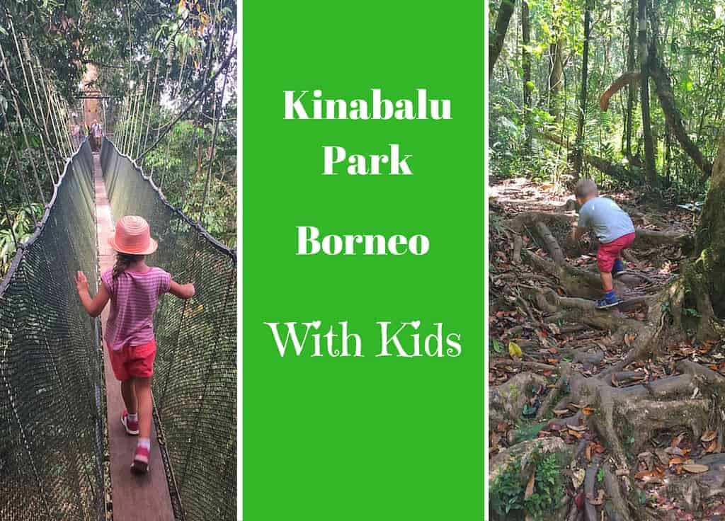 Kinabalu park with kids