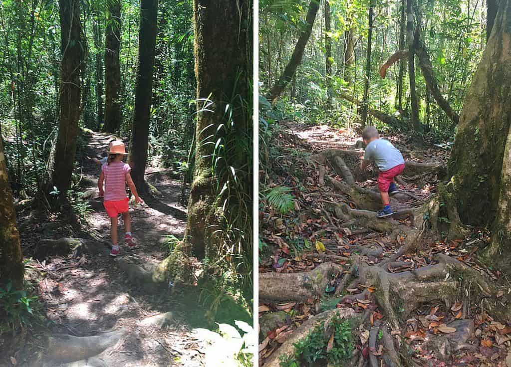 Kinabalu park trails