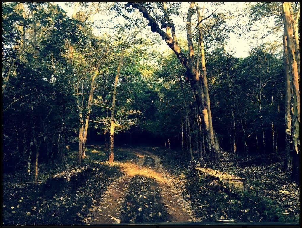 Forest Safaris Dandeli