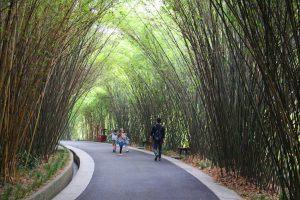 Chengdu panda base bamboo pathways