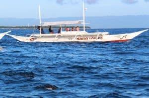 Dolphin Watching Bohol