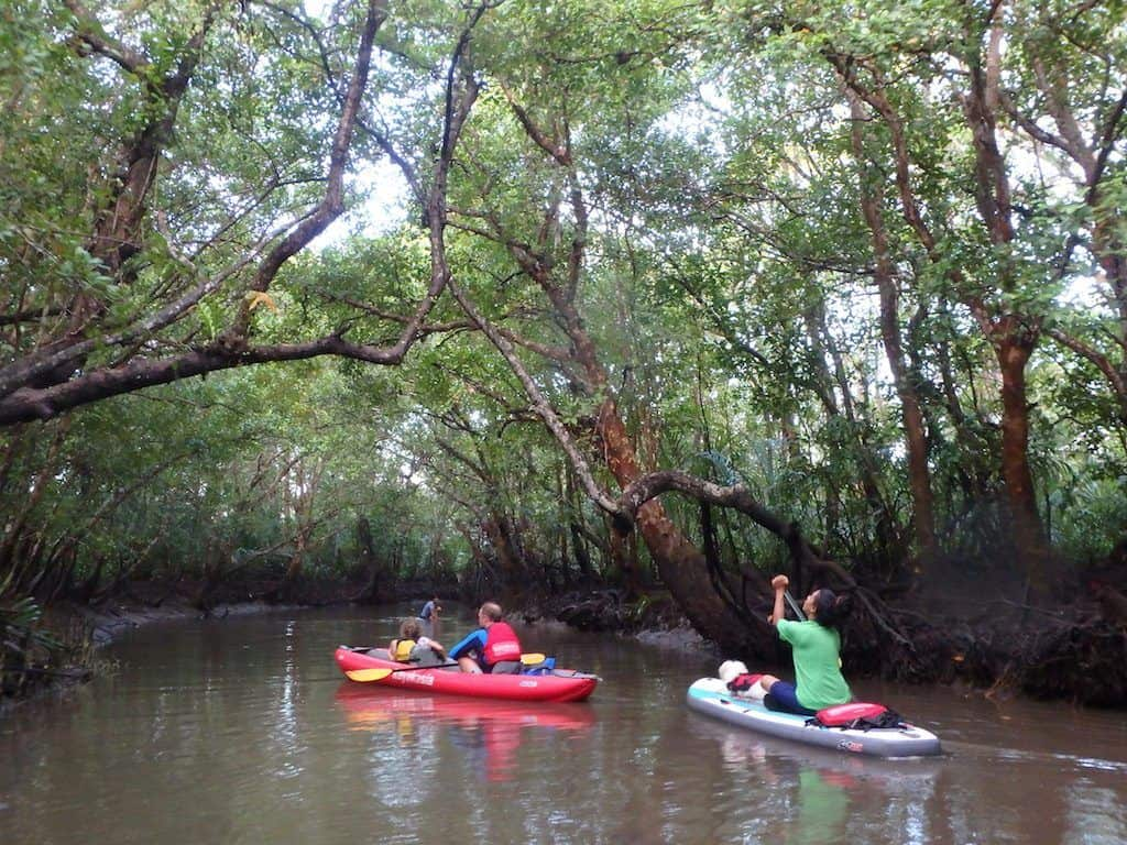Mangrove Kayaking Bohol