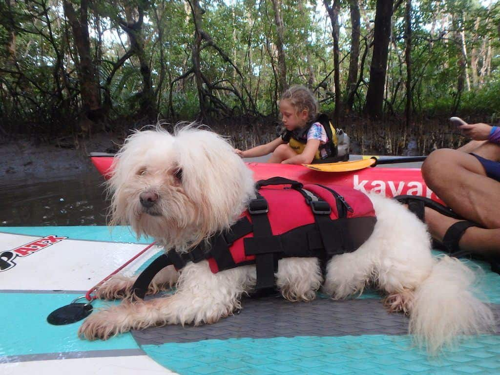 Dog kayaking Bohol