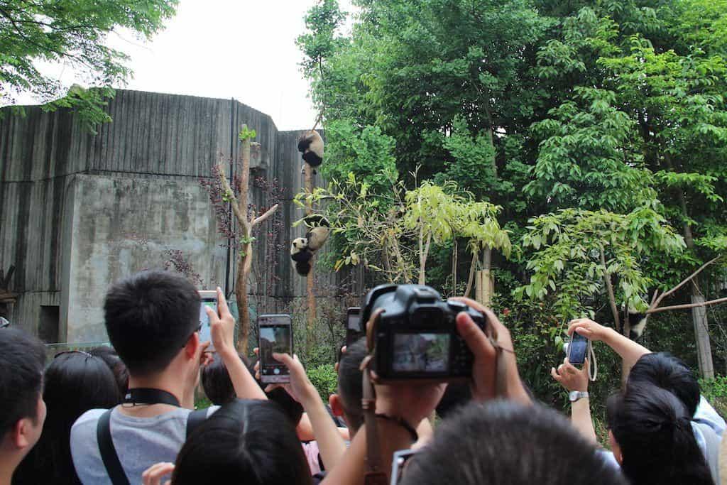 Panda sanctuary China