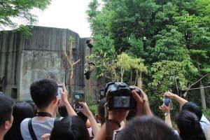 Panda base Chengdu crowds