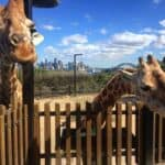 Taronga Zoo children's activities Sydney