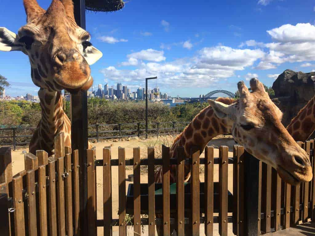 Taronga Zoo children's activities Sydney