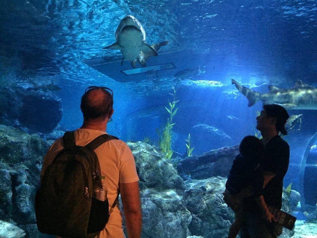 Bangkok Sealife aquarium