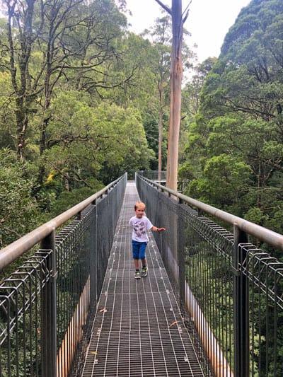 Otway Fly Treetop walk