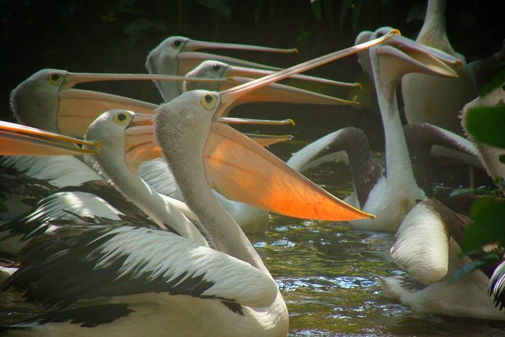 Bird Park Bali with Kids