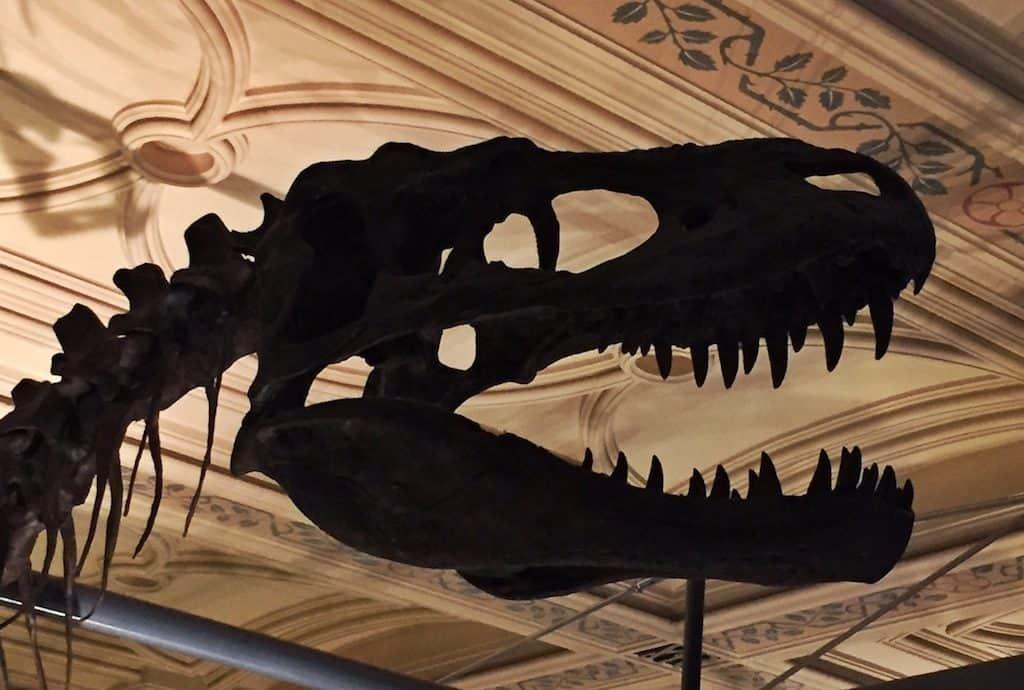 Natural History Museum London free