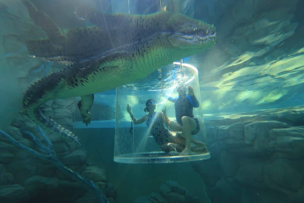 Cage of Death Crocosaurus Cove Darwin