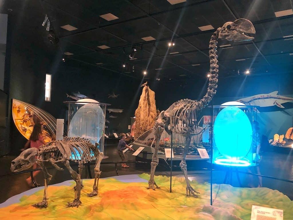 Darwin museum art gallery