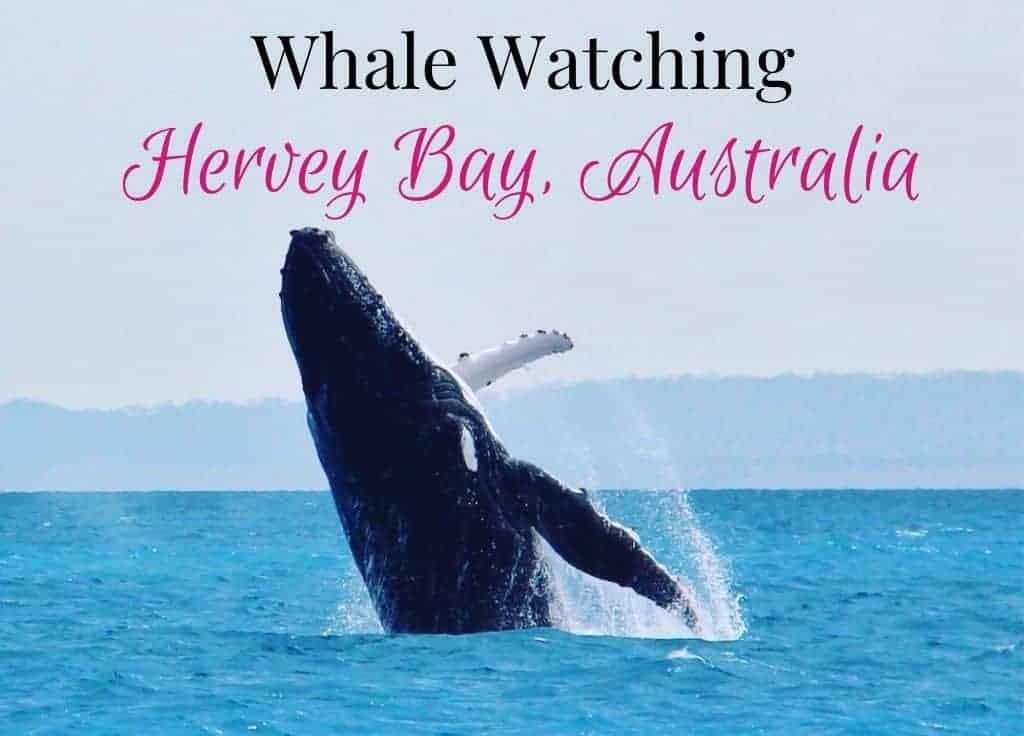 Whale watching Hervey Bay Australia