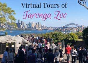 Taronga Zoo virtual tours
