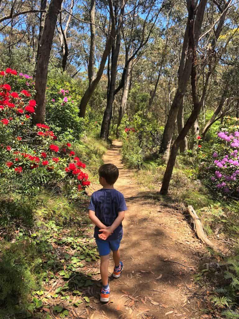 Child walking through rhododendron gardens blue mountains