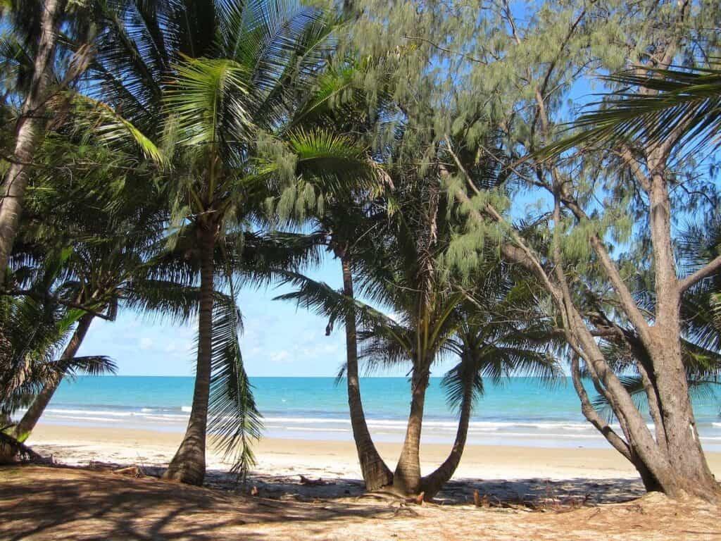 Trees at Four Mile Beach Port Douglas
