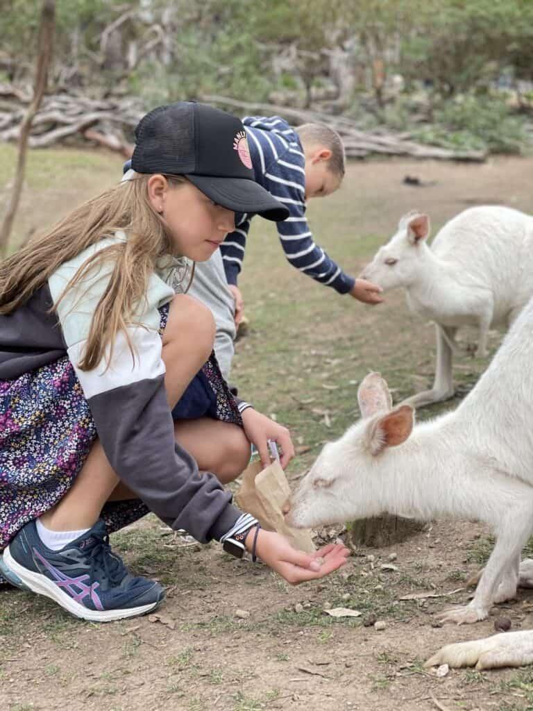 Kids feeding kangaroos at Gorge Wildlife park