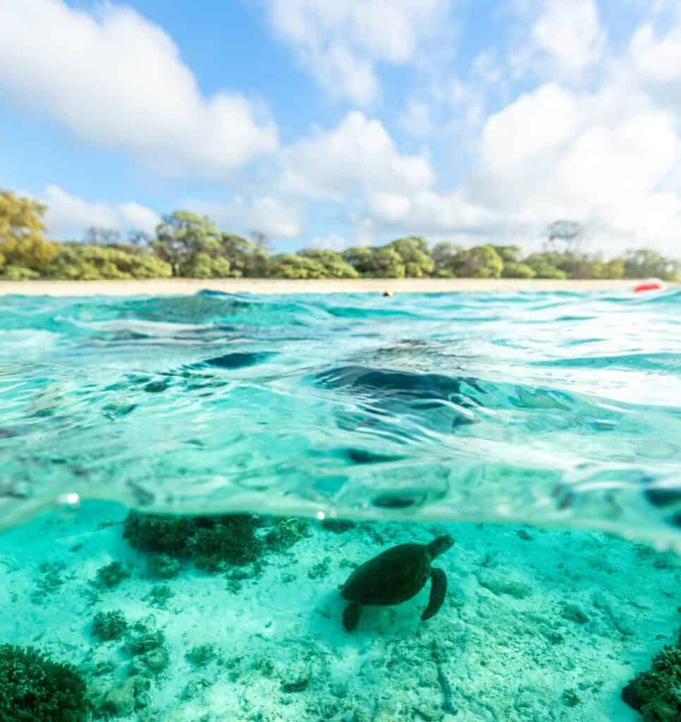 Turtle underwater at Lady Elliot Island