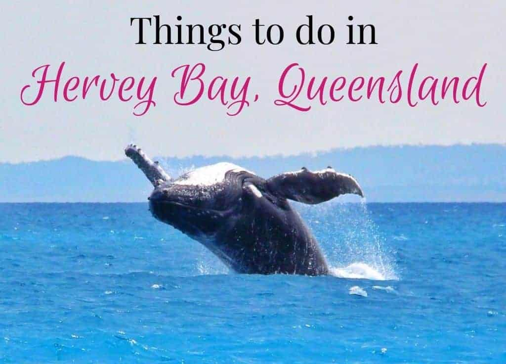 Things to do in Hervey Bay featured image featuring whale